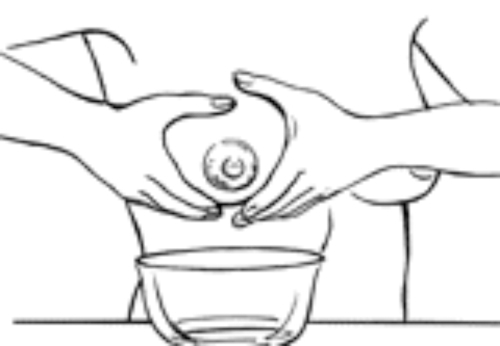 Drawing showing where hands should be placed to start the letdown process